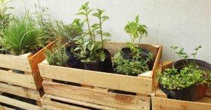 Comment planter de la menthe, du persil et du romarin à la maison